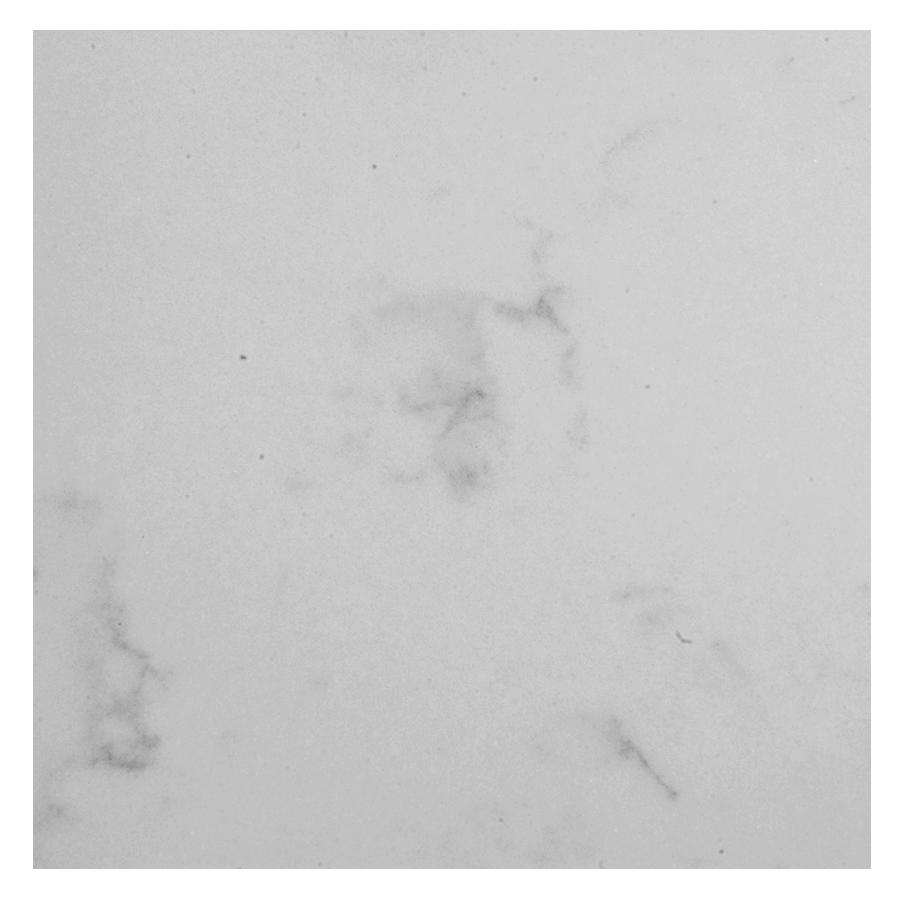 white grey stone top
